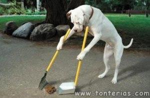 perro-limpia-caca