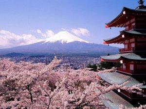 almendros-en-flor-al-fondo-el-fuhiyama-japon